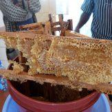 Bienenhonig tropft aus Waben in einem Holzgestell